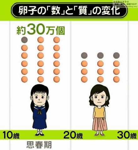 卵子の数と質の変化 10歳(思春期)~30歳