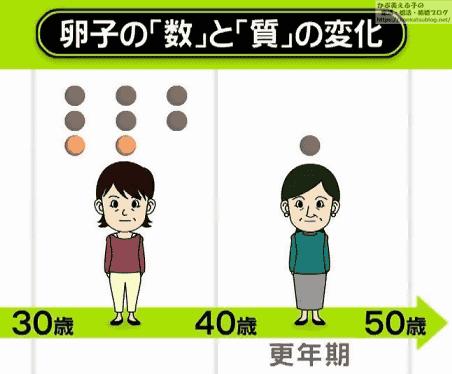卵子の数と質の変化 30歳~50歳(更年期)